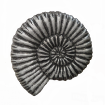 Ammonite Pewter Brooch